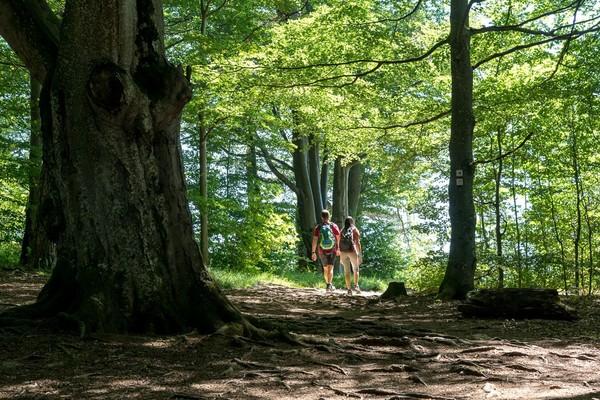 Schwäbische Alb_Wandern durch den Wald