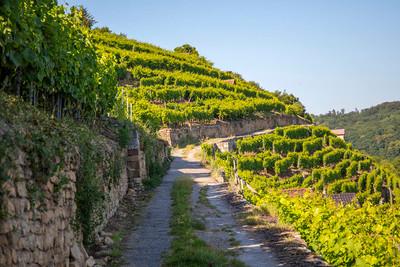 Weinsüden Weinort Bietigheim-Bissingen, Weinregion Kraichgau-Stromberg