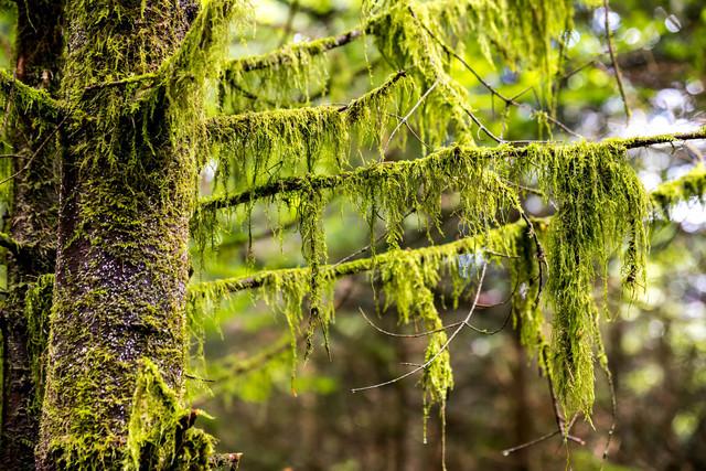 Baum im Nationalpark Schwarzwald