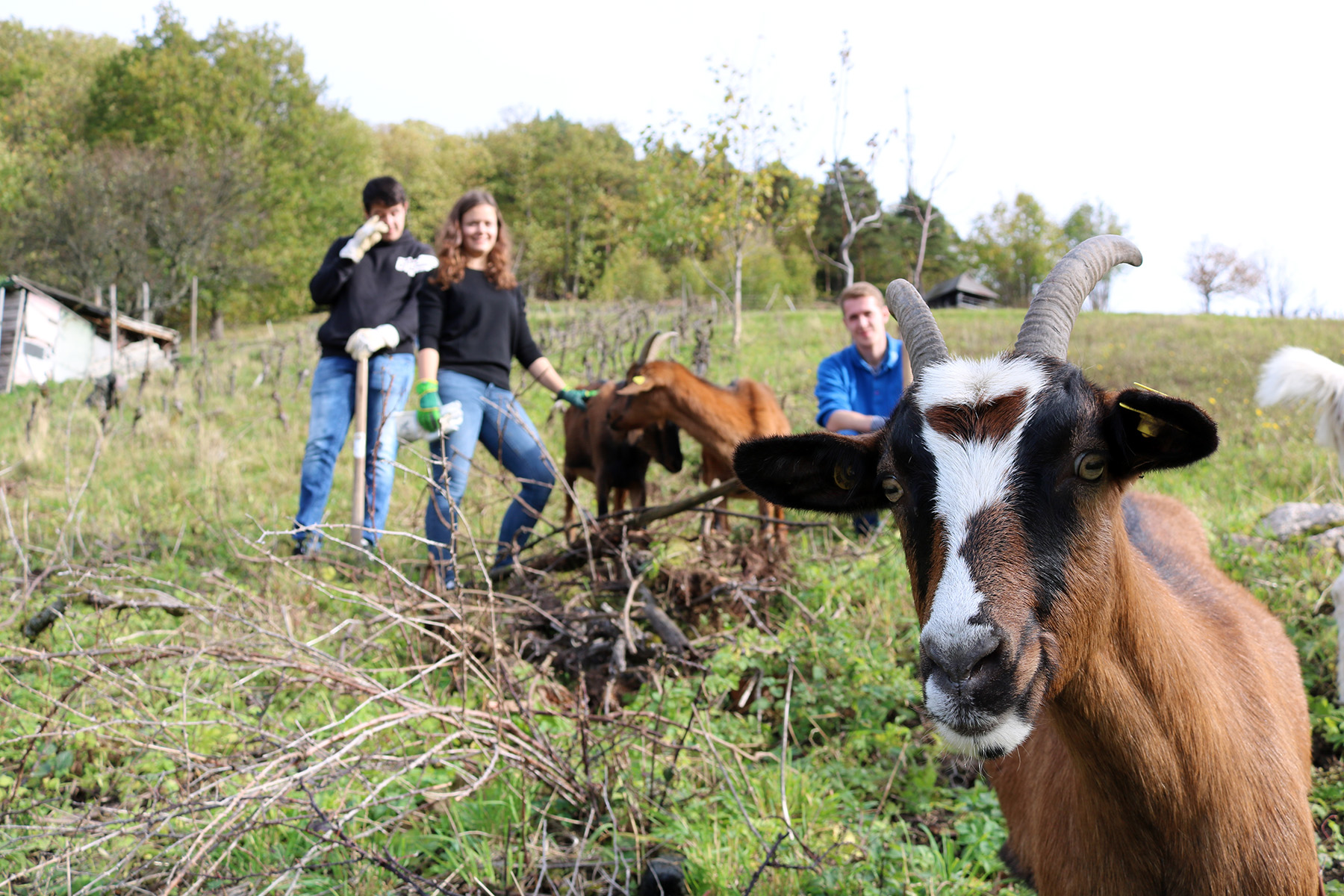 Projekt Herzenssache Black Forest