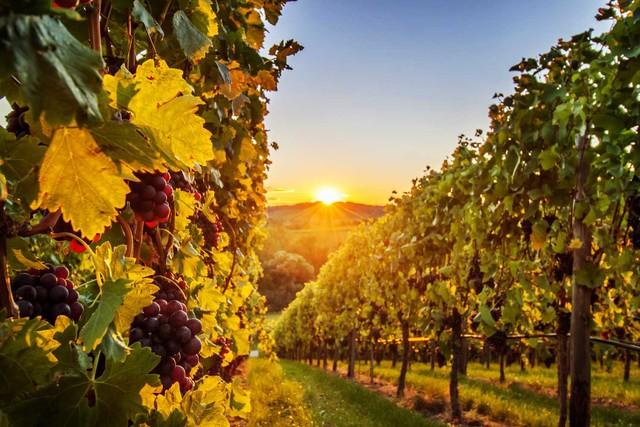 Heilbronner Land_Wein und Sonne