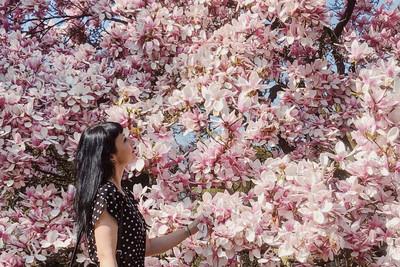 Magnolienblüte in der Wilhelma Stuttgart