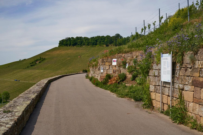 Weinsüden Weinort Weinsberg, Weinregion Heilbronner Land