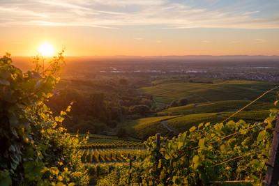 Baden-Baden, Weinlandschaft