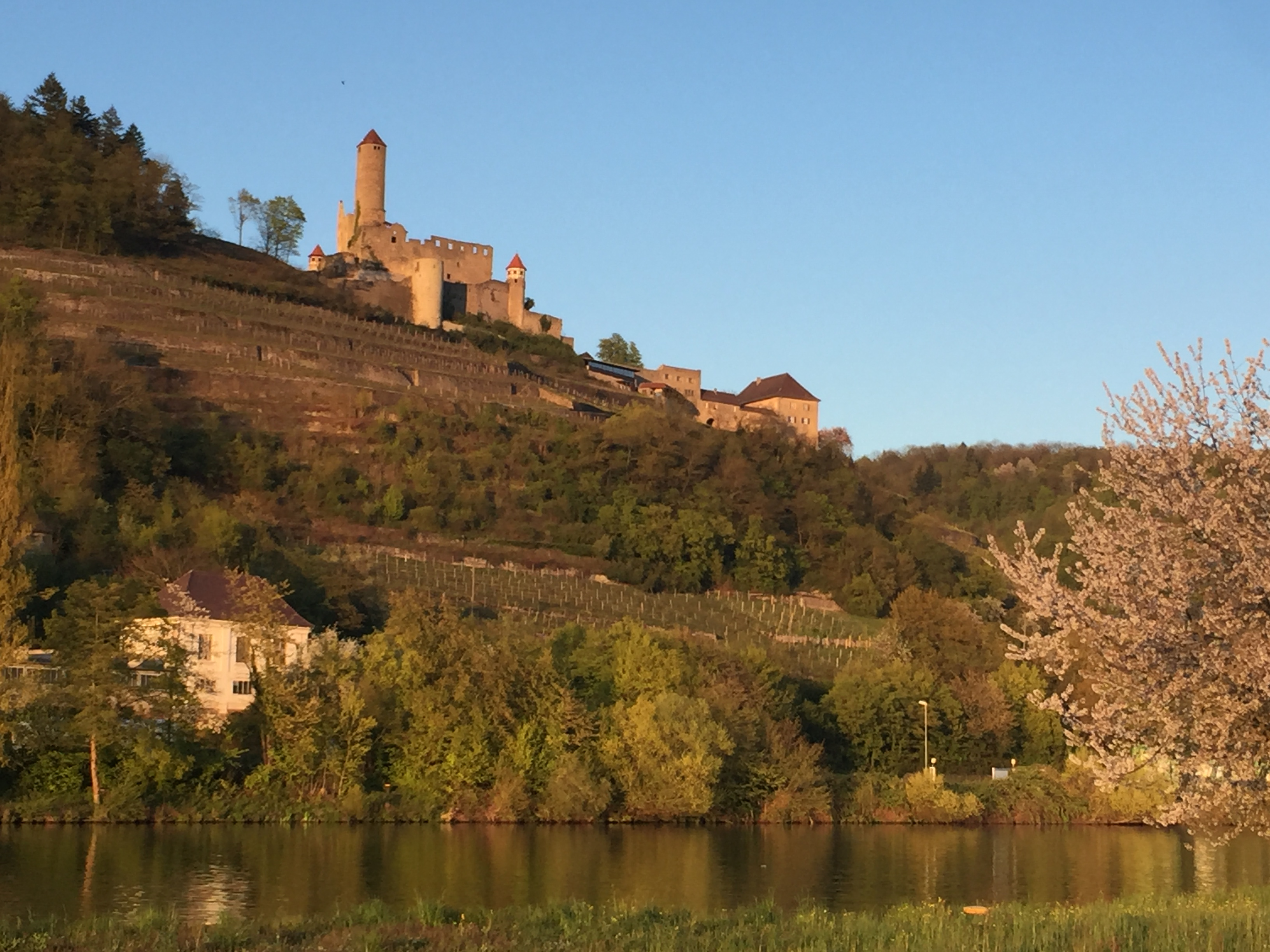Burg Hornberg am Neckar