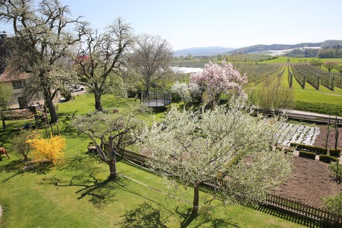 Organic fruit farm Oberhof Bodensee