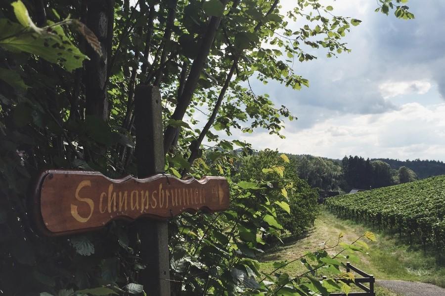 Sasbachwalden Schwarzwald Schnapsbrunnen - © Susi Maier, www.blackdotswhitespots.com