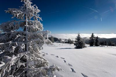 Schwarzwald Winter Idylle