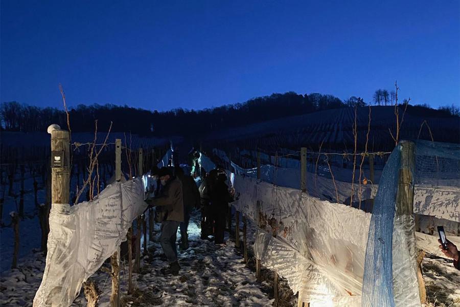 Weingut Zimmerle in Korb im Remstal bei der Eisweinlese 2021.