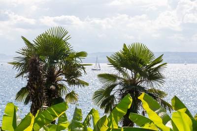 Meersburg Blick auf See Palmen
