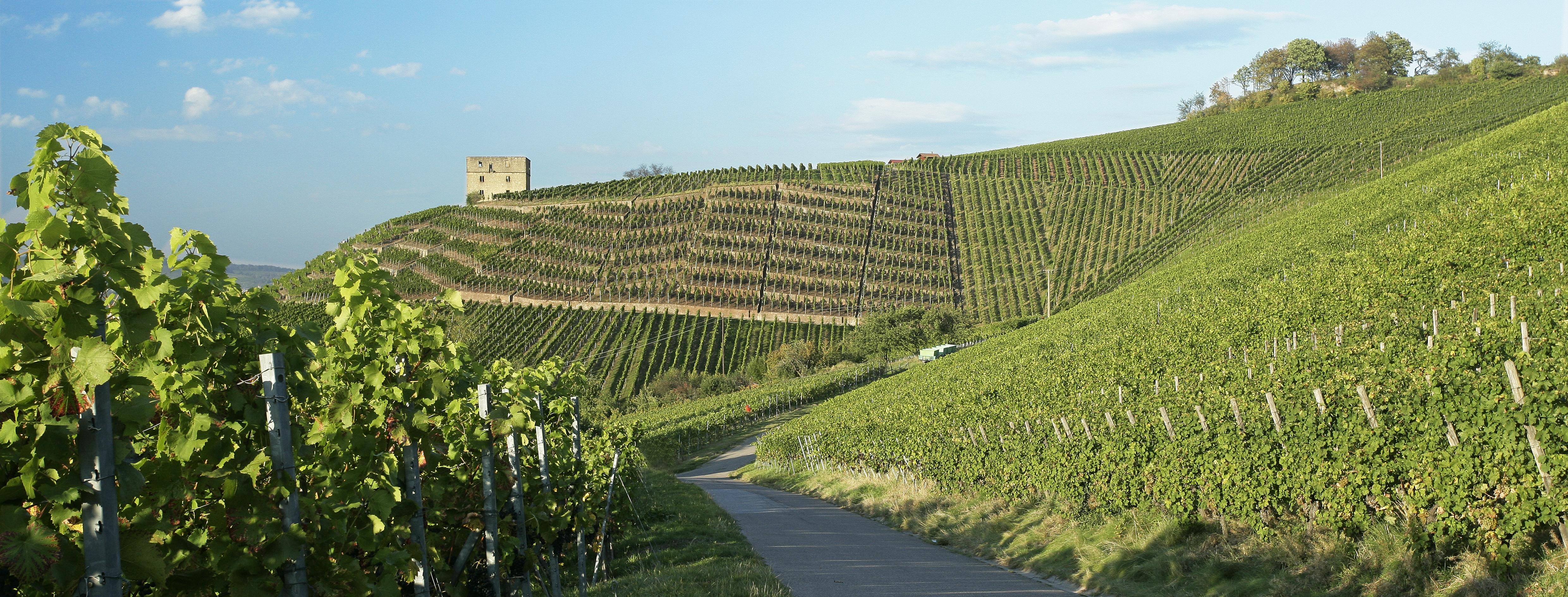 Steillage Stettener Brotwasser mit Y-Burg im Remstal Württemberg
