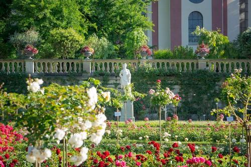 Blumeninsel Mainau am Bodensee, Rosengarten